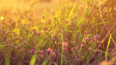 Über Blumenwiesen hüpfen