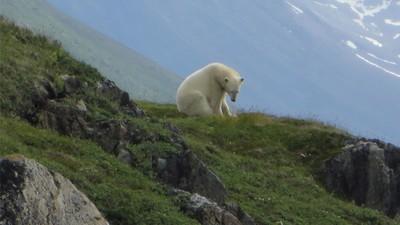 Der Eisbär-Mann