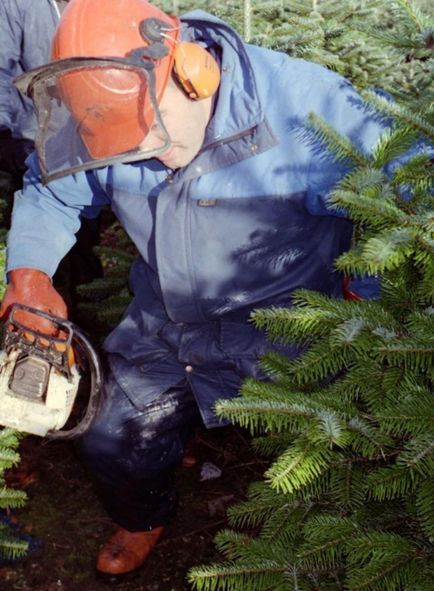 La deprimente vida de los árboles de Navidad