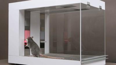 Ratten können deine Aktien managen