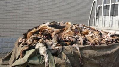 Tierschützer im chinesischem Schlachthaus