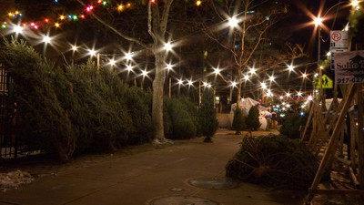 Why Do French-Canadians Dominate New York's Christmas Tree Market?