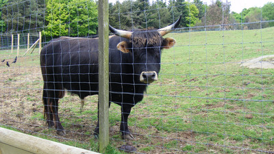 Some Murderous 'Nazi Cows' Have Been Murdered in the UK