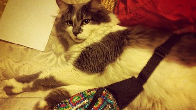 My Cat's Brush With Life-Saving Gender Reassignment Surgery
