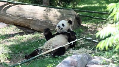 Was Pandas und Nihilisten gemeinsam haben