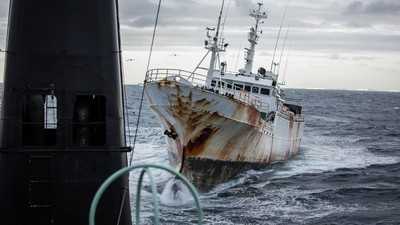 Cartels are Poaching Toothfish from Antarctic Waters