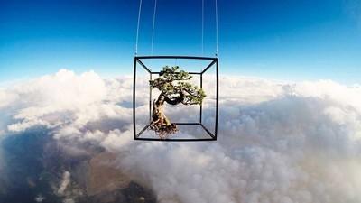 Ein Bonsaibaum reist durch die Stratosphäre