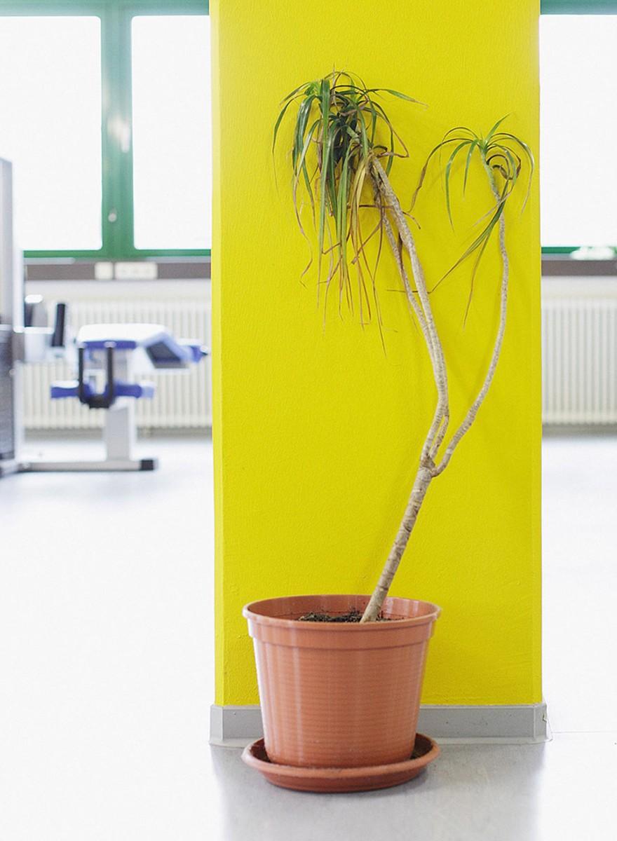 Pflanzen an den lebensfeindlichsten Orten überhaupt: Büros