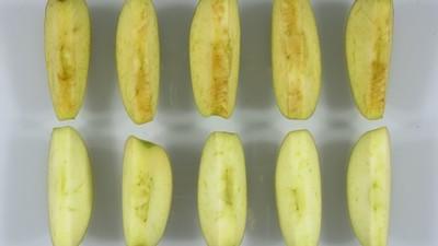 Ewige genetische Schönheit: US-Behörden lassen einen immergrünen Apfel zu