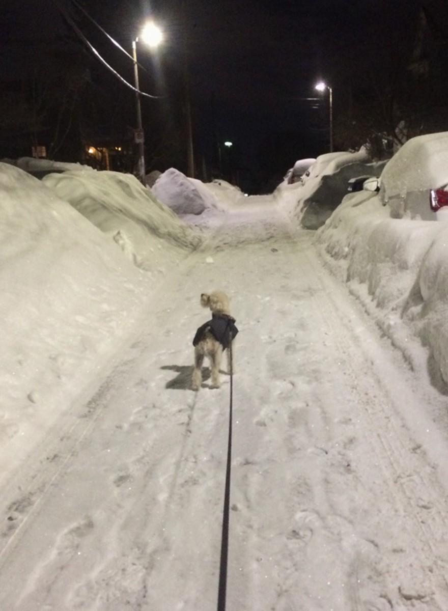 Boston versinkt im Schnee