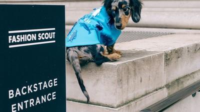 Llevamos a un salchicha a la semana de la moda en Londres