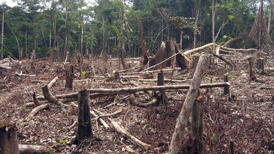 Brazil's Arrested Forest Kingpin Isn't the Only Problem Facing the Amazon