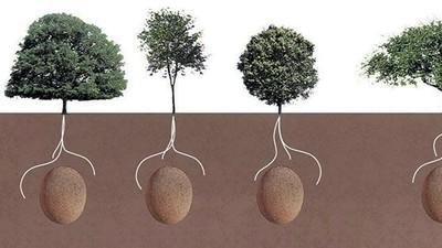 Aus deinem Leichnam könnte ein Baum werden