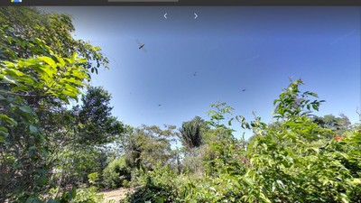 Google Street View Goes to the Rainforest