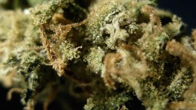 Entspannt euch mal, noch niemand ist je an einer Cannabis-Allergie gestorben