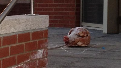 Someone Sent the Montreal Police Union a Bloody Pig's Head