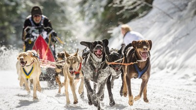 Chasing Down the World's Greatest Dogsledder