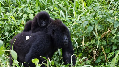 Congo Wants to Explore for Oil in a UNESCO World Heritage Site
