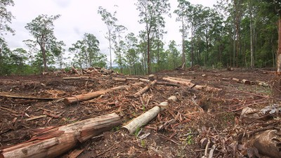 Australia is Clearing Shitloads of Forest and Queensland is Leading the Charge