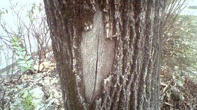 Elogio della 'figa di legno' italiana