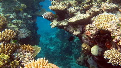 The New Plan to Save the Reef Focuses on Water Quality and Not Climate Change