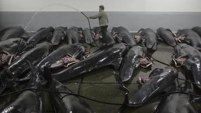 Vânătoarea de balene din Insulele Feroe