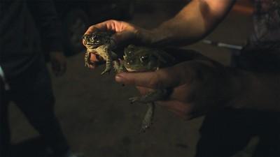 The Toad Prophet