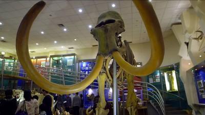 Clonarea mamutului lânos