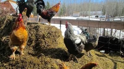 Northern Canada's Farming Revolution