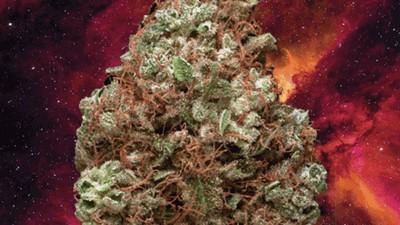 420 Songs über Weed