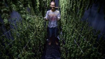 Exclusiva: visitamos el primer centro de cultivo de marihuana con fines médicos legalizado en Chile