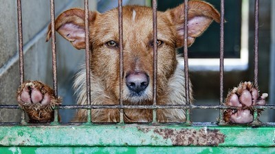The Complex, Tragic Psychology Behind Animal Hoarding