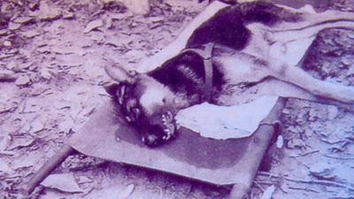 ​The US Military Euthanised or Abandoned Thousands of Their Own Canine Soldiers at the End of the Vietnam War
