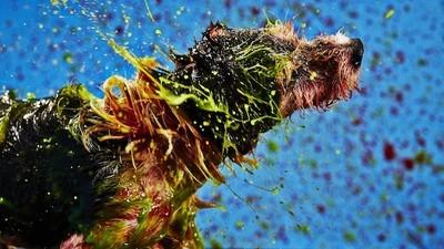 Estos perros se sacuden pintura en cámara lenta para crear conciencia