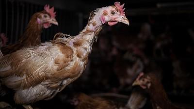La verdad sobre los huevos ecológicos