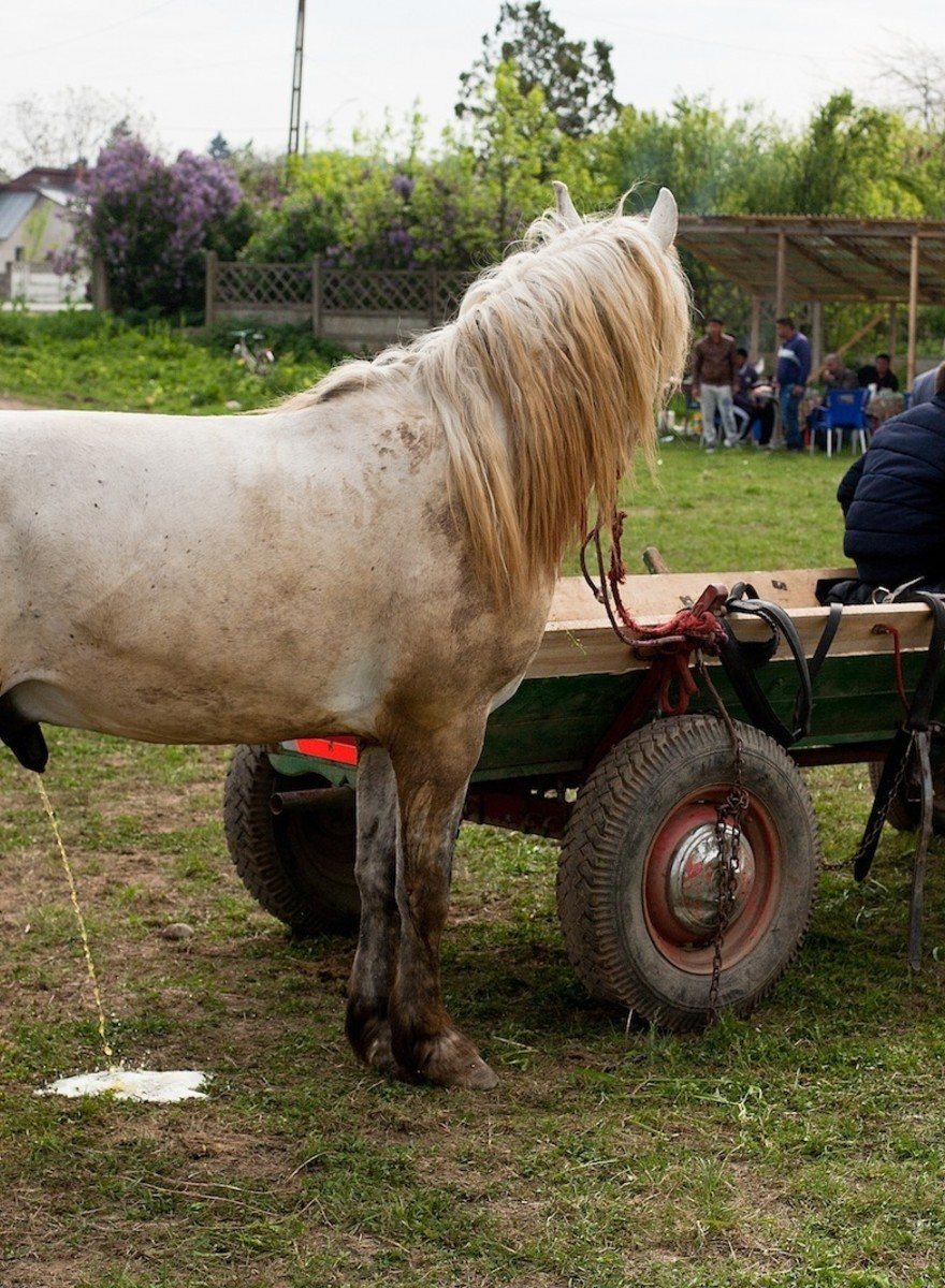 I Spent a Day Watching a Bunch of Men Whip Horses in Romania