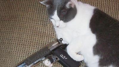 Am întrebat un expert dacă pisica ta te poate ucide