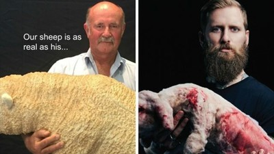 Jona Weinhofen vs. The Australian Wool Industry