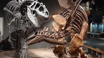 We spraken een paleontoloog over dinosauruspikken