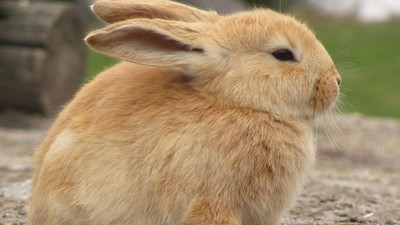 A Radio Host Beat a Baby Rabbit to Death with a Bicycle Pump On Air Yesterday