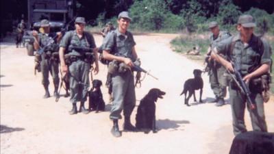 El ejército estadunidense sacrificó y abandonó a miles de soldados caninos al final de la guerra de Vietnam