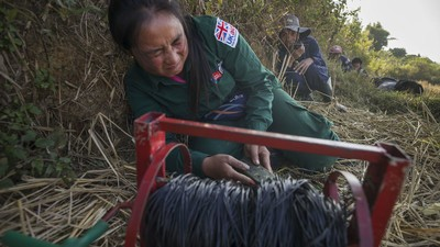 The Laotians Clearing Their Country of America's Unexploded Bombs