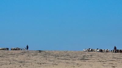 Der Ökotourismus rettet Tansanias Tiere und gefährdet seine Menschen
