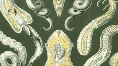 Door kunstmatige intelligentie weten we nu waarom platwormen onsterfelijk zijn