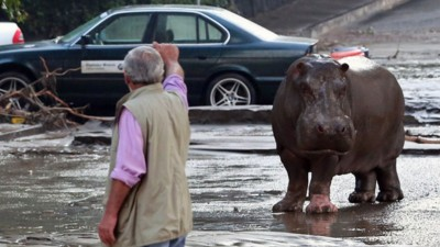 Lions, Tigers, Bears, Wolves, and a Hippo Run Wild in Tbilisi After Floods Damage Zoo