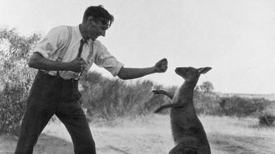 La tristemente prolífica historia de los combates de boxeo entre humanos y canguros