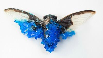 Wenn Insekten zu Kristallen werden