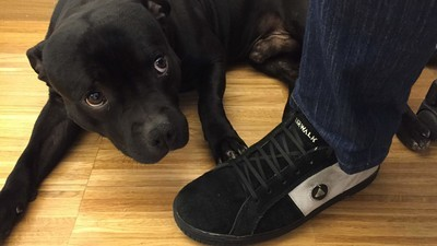 Perros potencialmente peligrosos, machistas, racistas e independentistas
