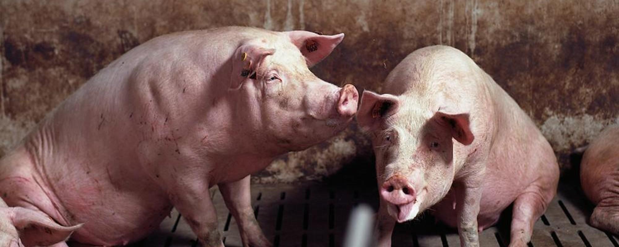 Animales en el corredor de la muerte