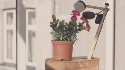 Ahora las plantas también pueden hacer selfies